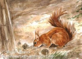 Harvesting Squirrel ACEO by Pannya
