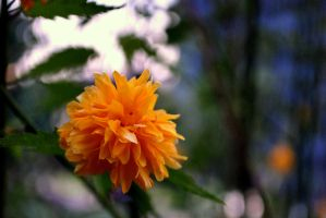 Flower by pourquoi25