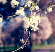Another photo about Springtime by Alessia-Izzo