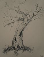 Old tree by the-nika