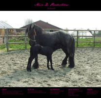 Horse stock 020 - Friesian by MiszD