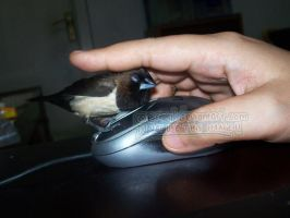 Why do you keep petting the mouse? by emmil