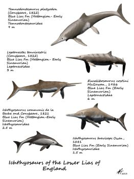 Ichthyosaurs of the Lower Lias of England by NTamura