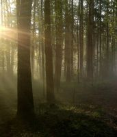 Foggy forest 5 by Theronius