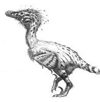 Linheraptor exquisitus by dustdevil