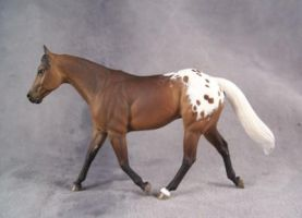 Appaloosa 'Working Girl' by ymagier