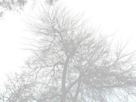 Tree for Background faded by GeneLythgow