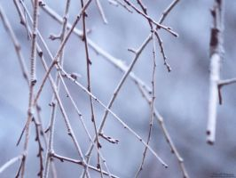Test Photo #1 - Winter Branches. by Sparkle-Photography