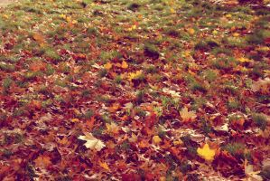 Fall leaves by thatcrazycross