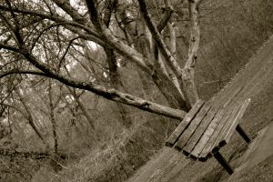 The lone bench by B-MoTheHuman