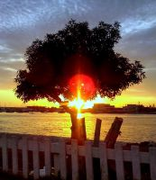 Tree in the sunset by Maleiva
