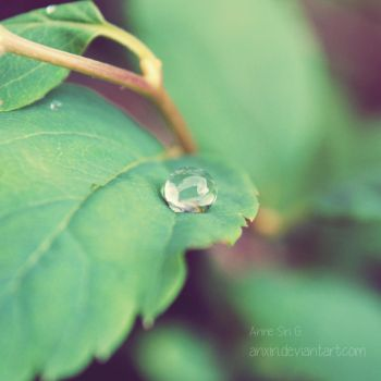 A drop of green.. by anxiri