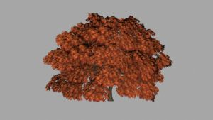 Japanese Maple Stage 4 by Ixionx