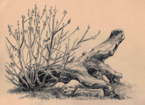 Sketch of a treetrunk at Bispebjerg by JakobHansson