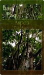 Aspen Pack by Baq-Stock