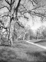 Secluded Path II by Defeet