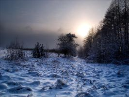 Some Kind of the Cold Light by rici66