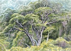 Outeniqua Yellowwood by WillemSvdMerwe