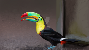 Toucan by Cllaud