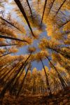 tamaracks by collectiveone
