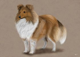 My shetland sheepdog by saeko-doyle