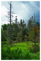Beaver Lodge Lost Pond Trail by padawan71