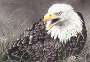 Eagle by Kirstine