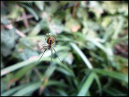 Spider 2 by Ph1at1ine
