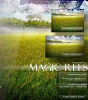 Magic rees by Osokin