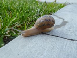 Snail 1 by Meow-Stock