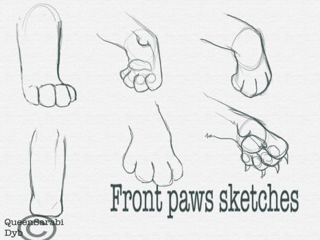 Front Paws Sketches by dyb