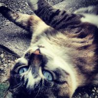 Pucci the cat by ShaneThread