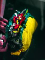 Taco cat1 by Mackingster