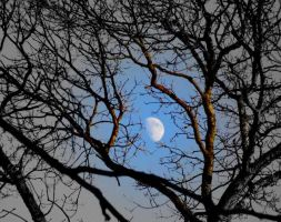 Moon in the day time . by velar1