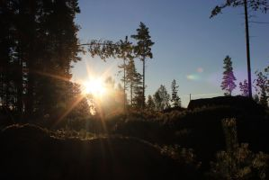 Sunrise In Forest 3 by purstotahti
