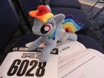 We got our race number by EquestriaPlush