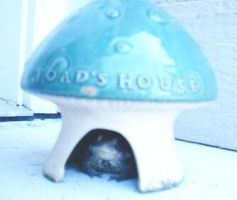 Toad's House by DeadEndFriend