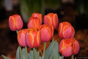 Welcome Spring by David-A-Wagner