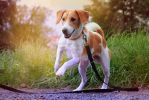 Eos - Shelter Pup by KaineHillPhotography