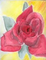 Rose water color by irelands-gem21