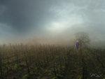 The Wine Country by nine9nine9