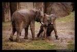 Elephants: Helping Trunk by TVD-Photography