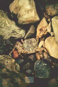 ...smallcrab... by reastphoto