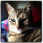 Luckie's Big Ears - Square by wiebkefesch