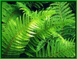 Fern-Green by Villa-Chinchilla