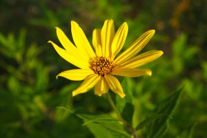 Yellow flower by perost