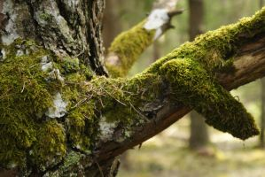 branch by Liisistock