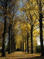 Autumn alley on South Cemetery by gen2oo9