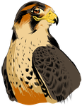 Smuggest Falcon by alan-cooper