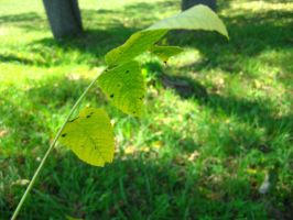 stick of leaves 3 by ElleStock